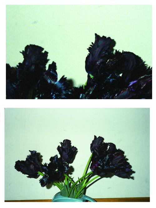 Blacktulips1