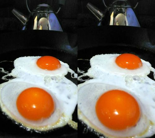 Miguels eggs