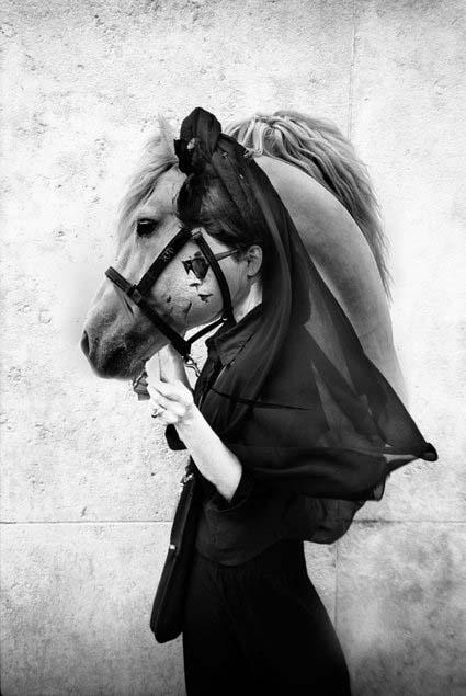 DP horse
