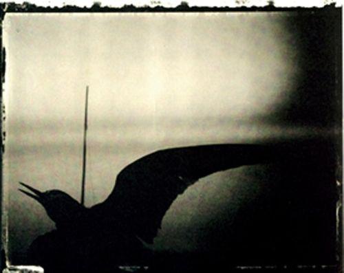 Arles05_crow