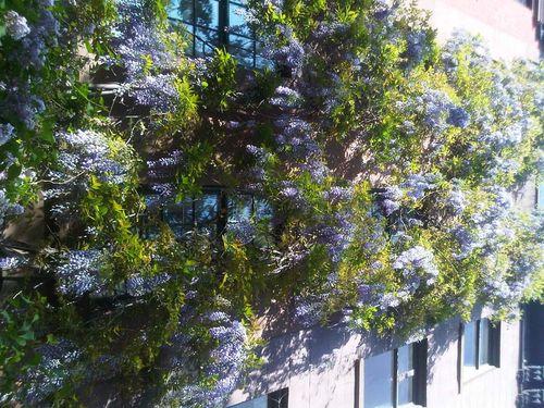 Todays blooms