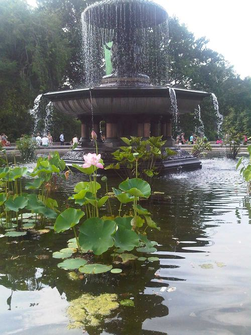 Miguel pond