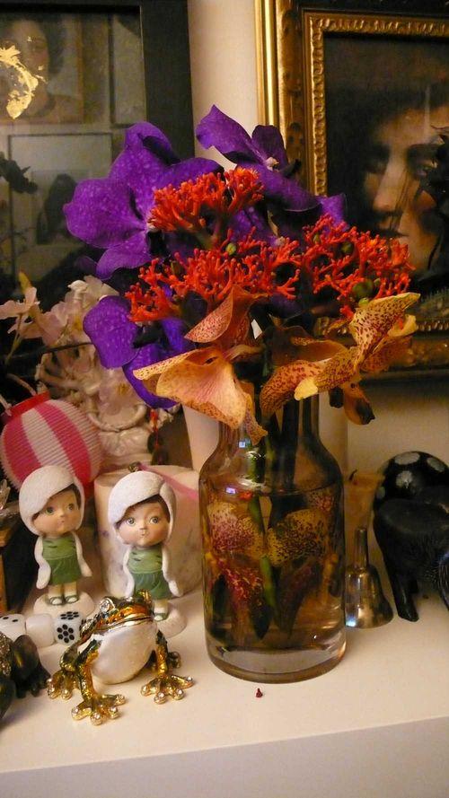 Purple orchids