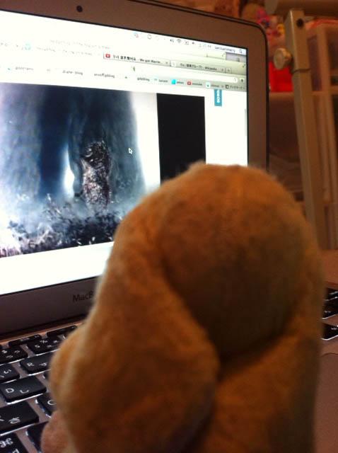 Lemon watching Hedgehog lost in the fog in Tokyo
