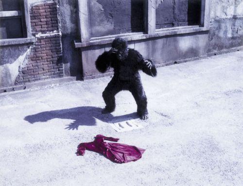 Piero cattani_gorilla