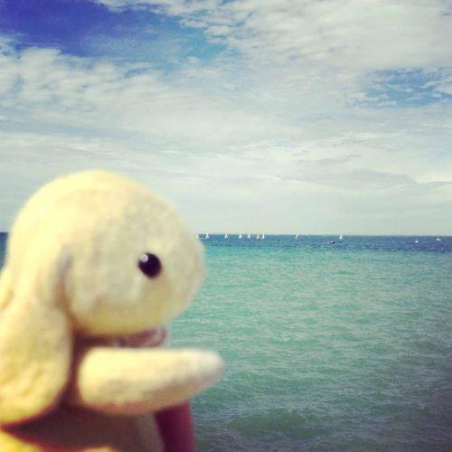 Lemon at the beach