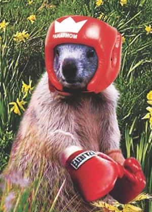 Jp_boxer