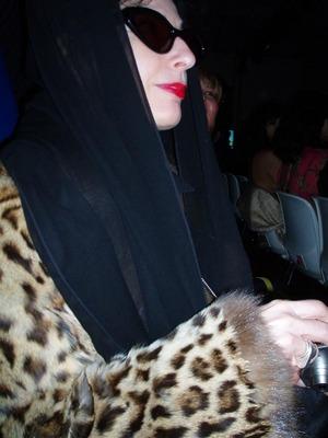 Dt_dp_cheetah