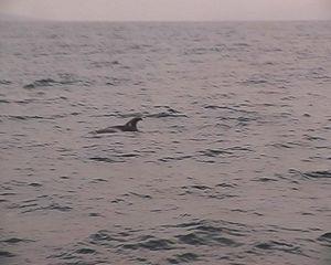 Walewatching9