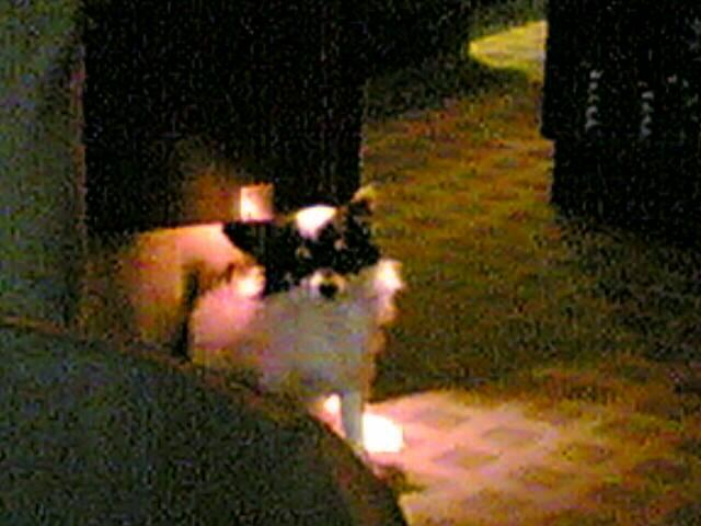 Sun 14/08/2005 20:36 DianePERNET(986)